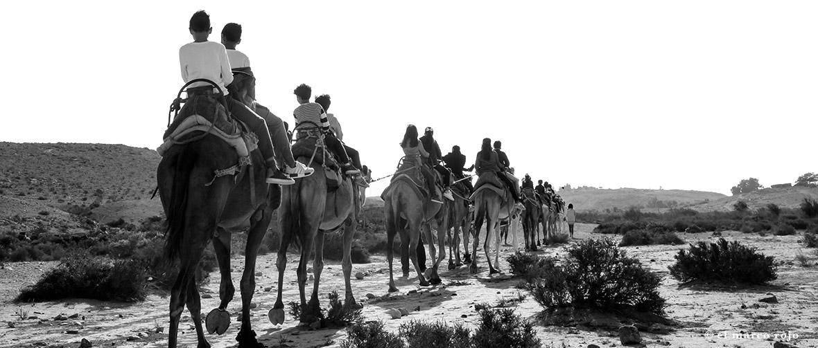 desert camel trip